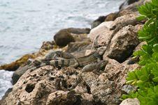 Free Lizards Stock Photo - 5357950