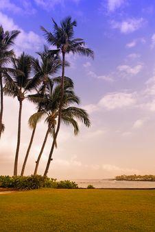 Free Beautiful Tropical Beach Stock Photo - 5358160