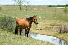 Free Quarter Horse Mare Stock Image - 5358771