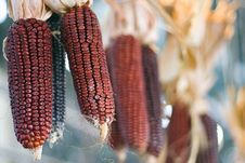 Free Hanging Red Corn Royalty Free Stock Photo - 5358865