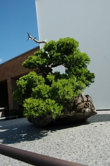 Free Japanese Bonsai Royalty Free Stock Photos - 5359098