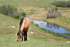 Free Quarter Horse Mare In Pasture Royalty Free Stock Photos - 5359108