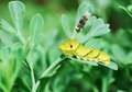 Free Lovely Larva Stock Images - 5365804