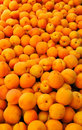 Free Farm Fresh Apricots Royalty Free Stock Photography - 5366367