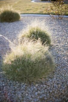 Free Desert Plant Royalty Free Stock Images - 5360179
