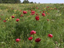Free Mountain Pasture Royalty Free Stock Photos - 5361538
