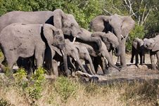 Free Elephants Drinking Royalty Free Stock Photography - 5361997