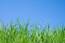 Free Green Grass And Blue Sky Royalty Free Stock Image - 5362156