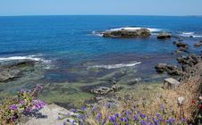 Wild Flowers On Rocky Shore Royalty Free Stock Photo