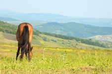 Free Lonely Horse Grazing Stock Photo - 5362670