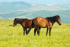Free Couple Of Horces Grazing Royalty Free Stock Image - 5362676