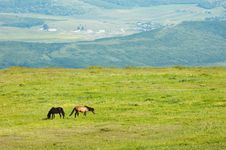 Free Couple Of Horces Grazing Royalty Free Stock Photos - 5362678