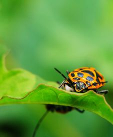 Free Bug On The Plant Stock Photos - 5363383