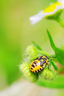 Free Bug On The Plant Royalty Free Stock Photos - 5363398