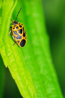 Free Bug On The Plant Royalty Free Stock Photography - 5363407