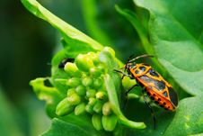 Free Bug On The Plant Stock Photo - 5363410