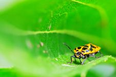 Free Bug On The Plant Stock Photography - 5363412
