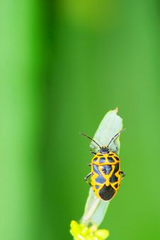 Free Bug On The Plant Stock Photos - 5363413