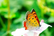 Free The Butterfly And Morning Glory Royalty Free Stock Image - 5363546
