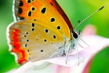 Free The Butterfly And Morning Glory Stock Image - 5363551