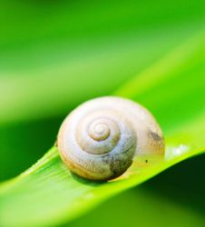 Free Snail Royalty Free Stock Images - 5363929