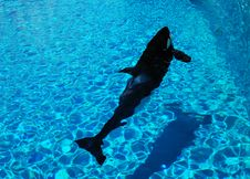 Free Whale In A Pool Stock Photo - 5364240