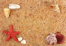 Starfish And Cockleshells On Seacoast Royalty Free Stock Photos