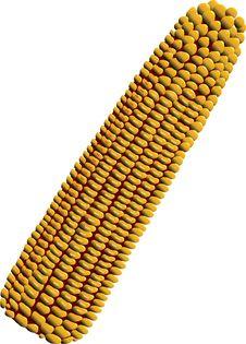 Free Corn Stock Photo - 5364770