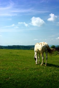 Free Horse On Pasture Royalty Free Stock Photography - 5365737