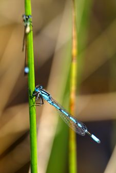 Free Little Black And Blue Dragonfly Royalty Free Stock Photography - 5366457