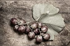Free Dark Grapes. Royalty Free Stock Photos - 5366878