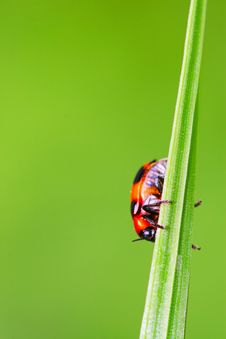 Free Bug On The Plant Stock Photo - 5368180