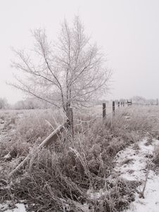 Free Fence & Tree In Winter Stock Photo - 5369150