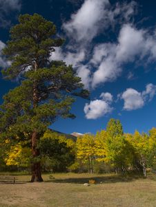 Free Evergreen In Autumn Royalty Free Stock Image - 5369166