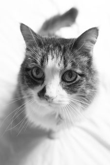 Free Cat Stock Images - 5369184