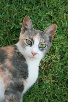 Free Cat Portrait Stock Photos - 5369293