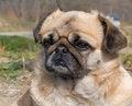 Free Small Dog 10 Stock Photos - 5370133