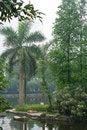 Free Tropic Island Royalty Free Stock Photos - 5370908