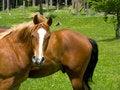 Free Wild Horse Look Stock Photo - 5375950