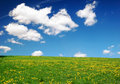 Free Landscape With Yellow Dandelions Stock Photos - 5377833