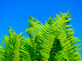 Free Fern Stock Images - 5378054