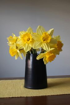 Free Daffodil Stock Images - 5370104