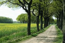 Free Tree Alley Stock Images - 5370144