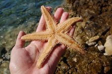 Free Seas Star Stock Photography - 5370672