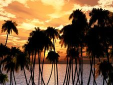 Free Palms Tops Royalty Free Stock Photography - 5371067