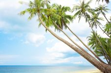 Free Tropic Shore Stock Images - 5371104