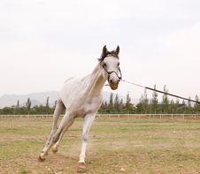 Free Arab Horse Stock Image - 5371231