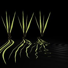 Free Bamboo Grasses Beauties Royalty Free Stock Image - 5371346