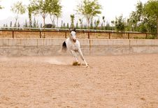 Free Arab Horse Stock Photography - 5371392