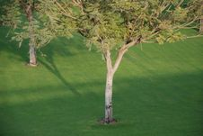 Free Couple Of Trees Stock Photos - 5371573